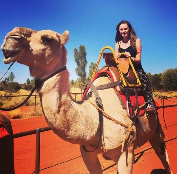 camel farm ayers rock uluru